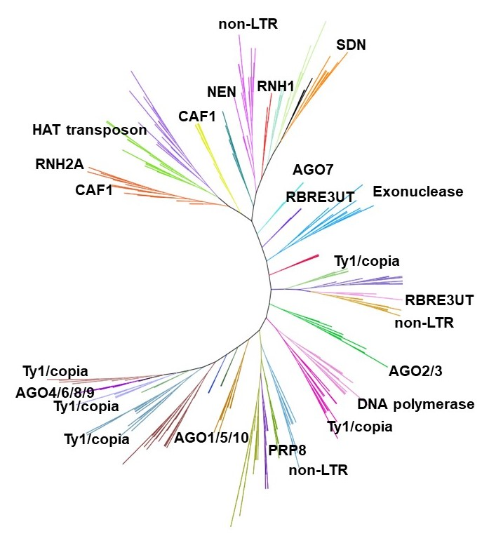 Comprehensive Classification Of The RNaseH-like Domain