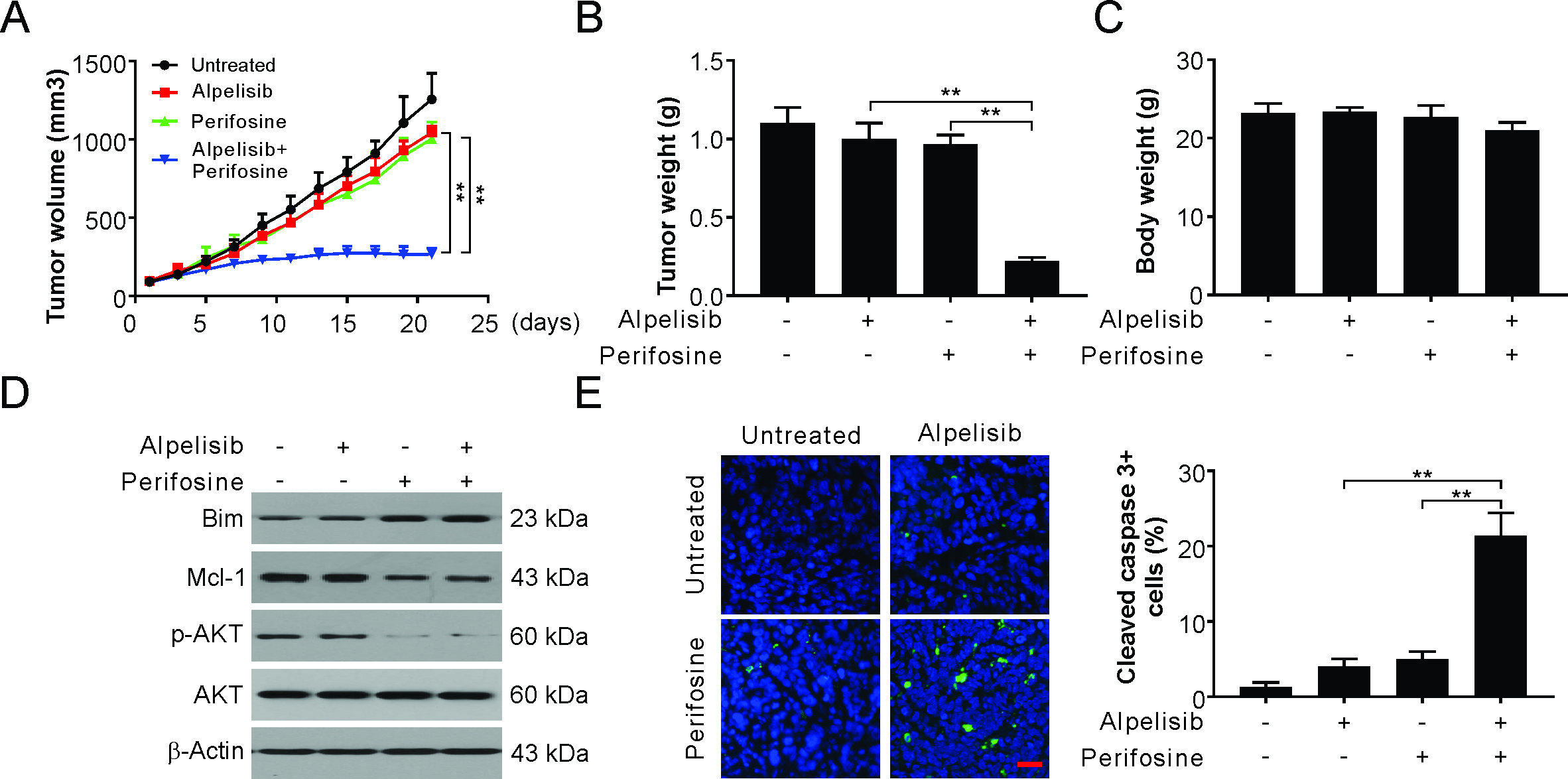 Alpelisib Inhibits Pik3ca Mutant Breast Cancer Growth Through Akt Dependent Bim Induction And Mcl 1 Degradation Research Square